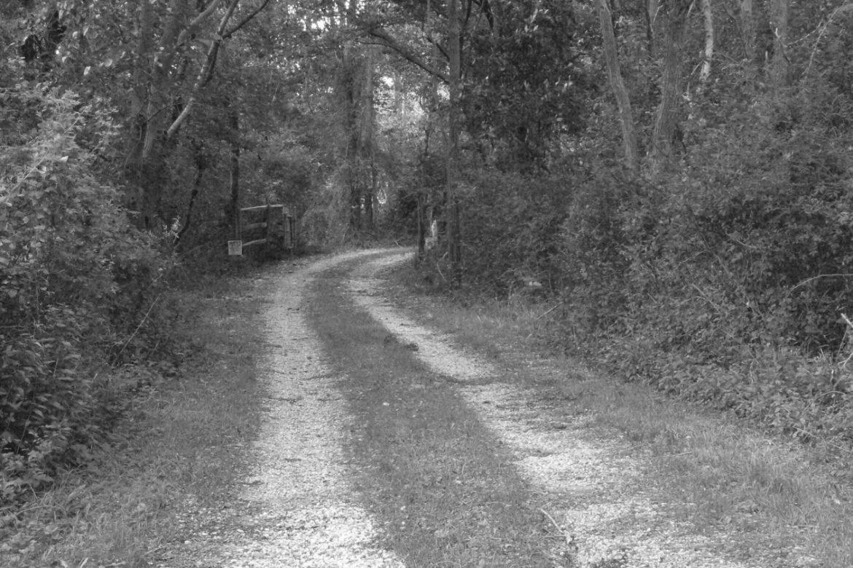 Linda-Catlin-Smith-Dirt-Road-1170x780